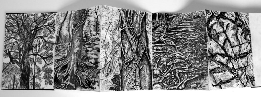 Weaving lines of the forest, a series of drawings for Basketcase by Kristina Veasey.